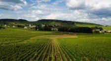 Camping Burgundy